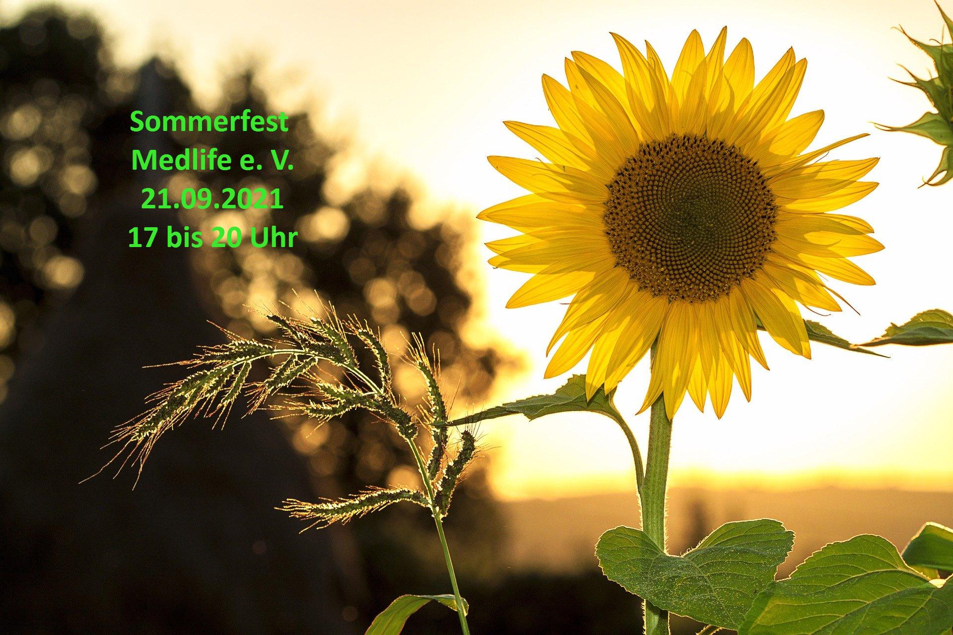 sunflower-1127174_1920-2